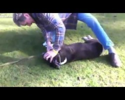 Man Is Caught Doing THIS To A Dog, But WHY He's Doing It Is INCREDIBLE