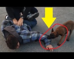 "Police K9 Puppy Apprehends Fleeing ""Suspect"", And It's The Cutest Thing EVER"