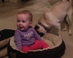 Pug Takes Matters Into His Own Paws When His Comfy Bed Gets Taken Over By A Tiny Human