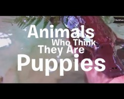 These Animals Think They're Puppies, But They're So Adorably Wrong!