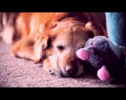 This Touching Video Explains WHY God Made A Dog. A Must-See For All Dog Owners.