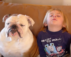 Bulldog and Little Boy Falling Asleep Is The Funniest Thing Ever