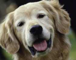 2015 Most Popular Dog Names and Breeds