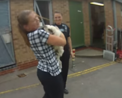 Stolen Pug Reunites With Her Owner. Her Reaction Is PRICELESS.