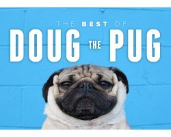 The Best of Doug the Pug. It's Awesome.