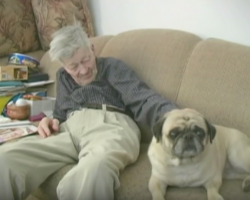 An Elderly Man and His Senior Pug Aging Together. What a Lovely Story!