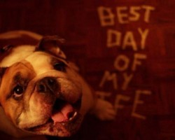 Best Day Of My Life (English Bulldog Version)