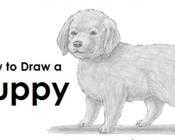 How to Draw a Puppy!