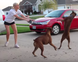 Crazy Boxer Dog Logic Is Outrageously HILARIOUS