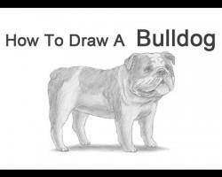 How to Draw a Bulldog (English Bulldog)!
