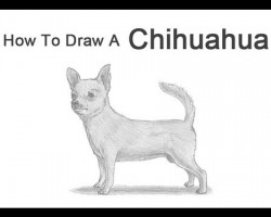 How to Draw a Chihuahua!