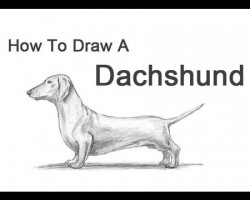How to Draw a Dachshund!