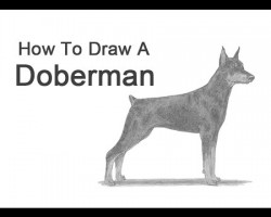 How to Draw a Doberman Pinscher!