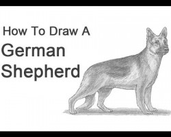 How to Draw a German Shepherd!