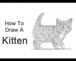 How to Draw a Kitten!