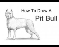 How to Draw a Pit Bull!