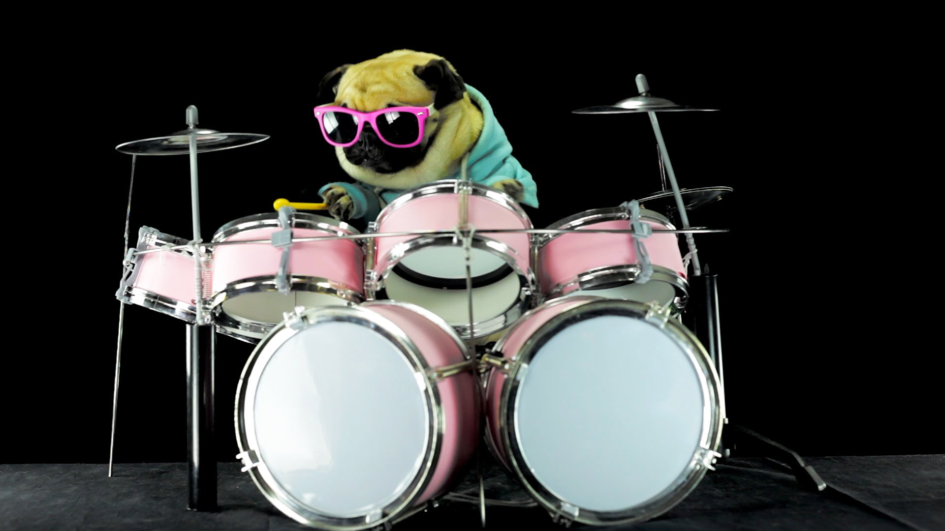 pug rocks out drum to metallica song enter sandman it s. Black Bedroom Furniture Sets. Home Design Ideas