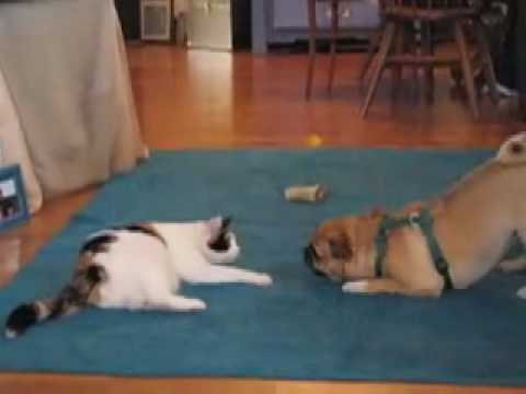 cat and dog love hate relationship synonym