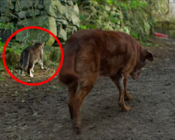 Stray Cat Does THIS For Blind and Partially Deaf Dog. Unbelievable. Wow.