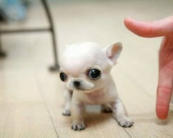 These 17 Itty Bitty Puppies Are Guaranteed To Make You Smile!
