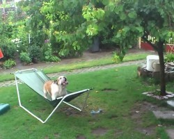They Caught Their Bulldog Doing THIS In The Rain, And It's HILARIOUS!