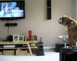 This Bulldog Thinks He's An Elephant! It's Hilarious!!