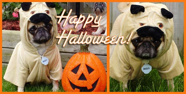 10 more awesome halloween costumes for pugs - Pugs Halloween