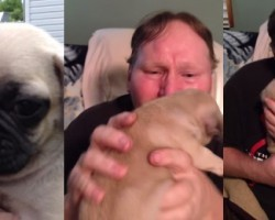 Pug Puppy Gets Grown Man Reduced To Mush!