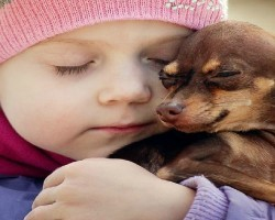 12 Realities New Chihuahua Owners Must Accept