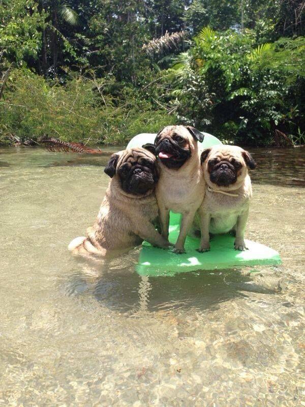pugs water board