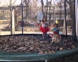 Rebellious Pug Poops On Trampoline And Shocks Children