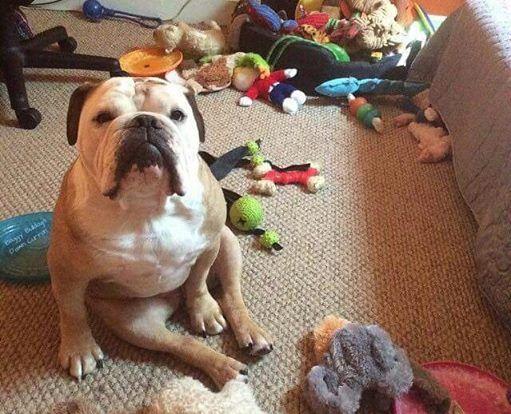 english bulldog toys
