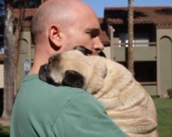Pug Does The Cutest Thing Ever To His Dad When He Is Sad