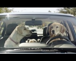 "Subaru Unveils Subaru Concord Commercial ""In The Dog House"""