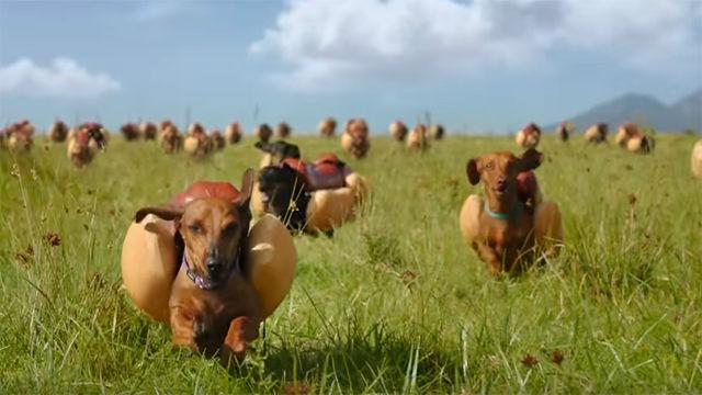 Hot Dog Ketchup Commercial