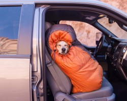 Photographer Adopts Dog From Shelter And Takes Him On Epic Adventures Across America