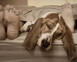 12 Realities New Basset Hound Owners Must Accept