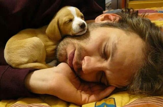 beagle baby napping on person