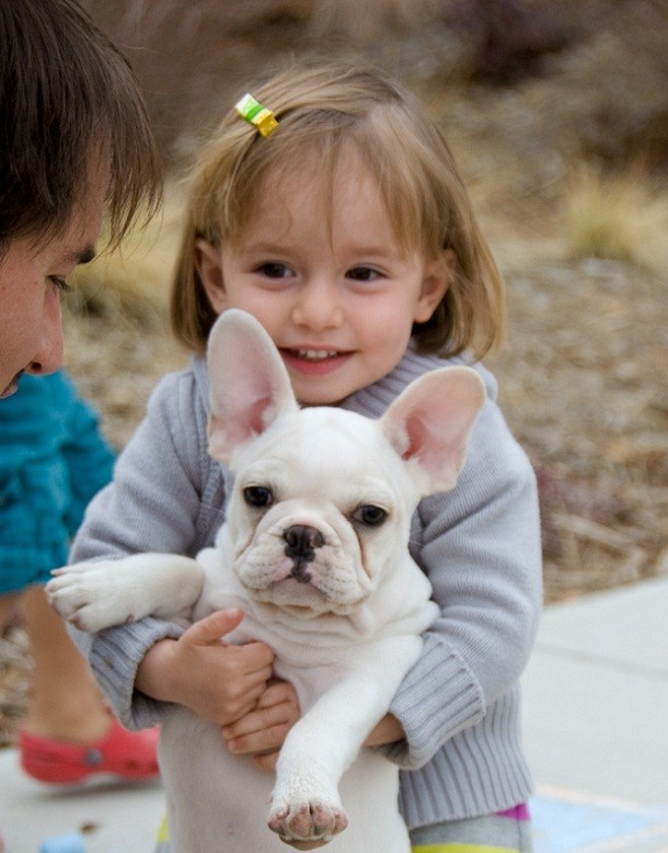 french-bulldog-child.jpg