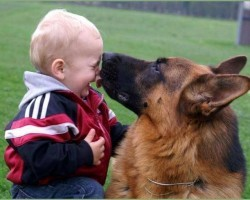 10 Things German Shepherd Owners Must Never Forget