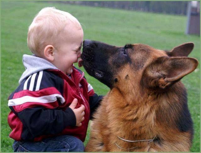 Resultado de imagen para german shepherd and kid
