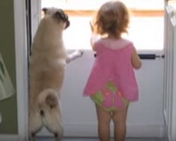 (VIDEO) Little Girl and Pug Become Inseparable. This Will Melt Your Heart!
