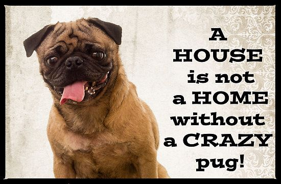 A House is not a home without a crazy pug