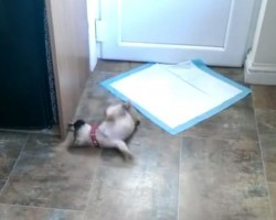 Cute Puppy Throws Temper Tantrum Over Door Stopper. It May Just Be The Cutest Thing EVER!