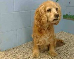 Senior Dog Cries As Owner Leaves Her Behind And Walks Out With Young Dog … But Someone Listened