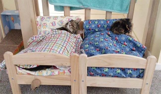 Bunk Bed Kitties