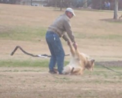 This Lazy Golden Retriever Doesn't Want To Leave The Park