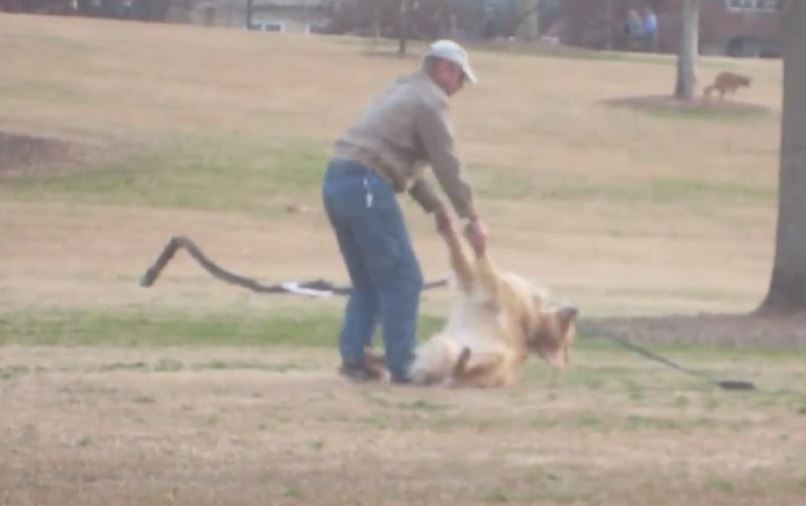 This Lazy Golden Retriever Doesnt Want To Leave The Park - Dog learns to play dead so he doesnt have to leave the park