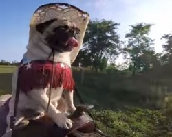 Pug Dressed As Cowboy Takes A Horseback Ride – What Happened Is Obviously Adorable