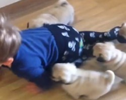 Adorable Toddler Tries to Outcrawl a Stampede of Pug Puppies